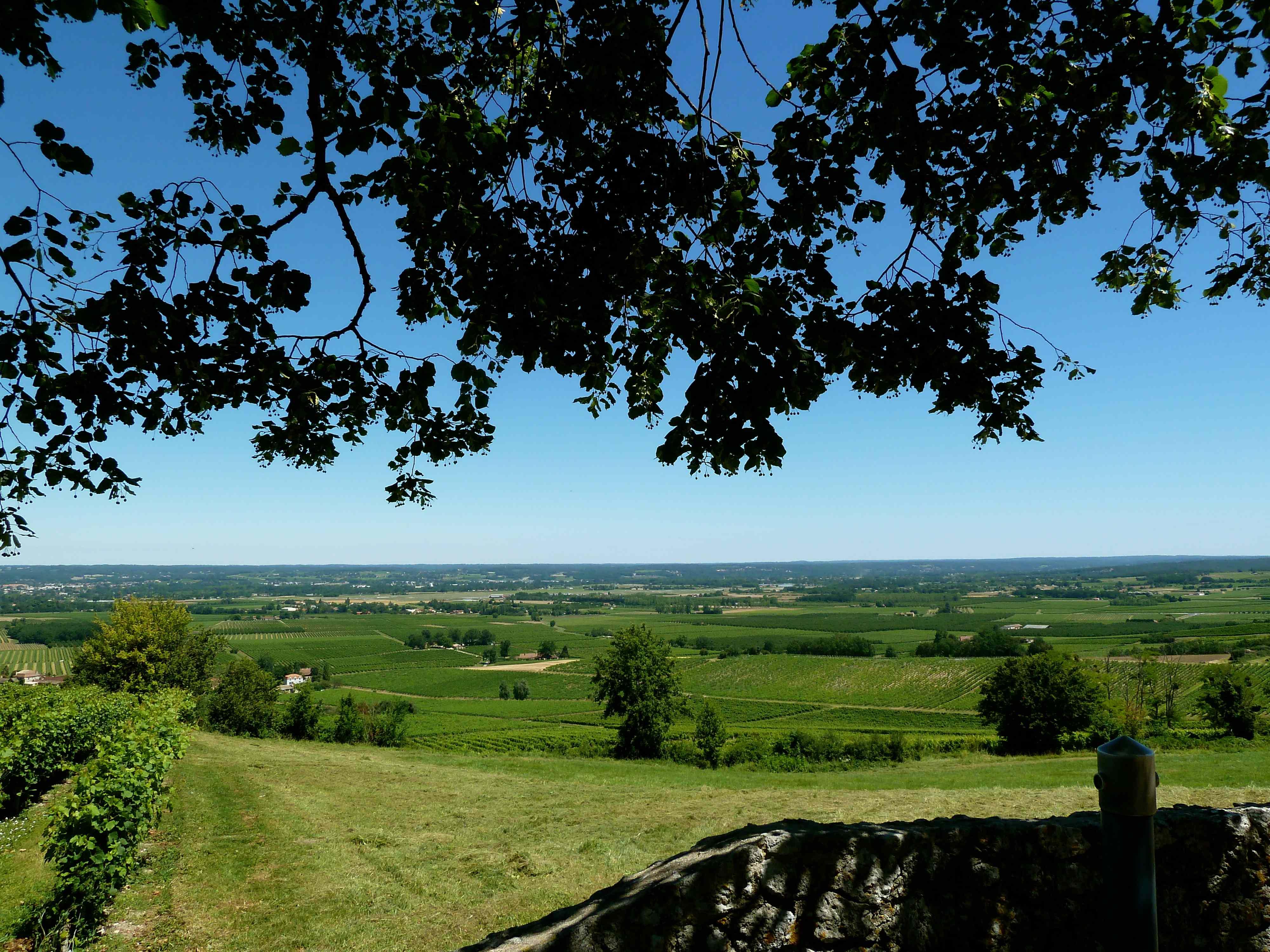 Photo monbazillac 24240 les vignes du vin de - Camping les vignes lit et mixe site officiel ...