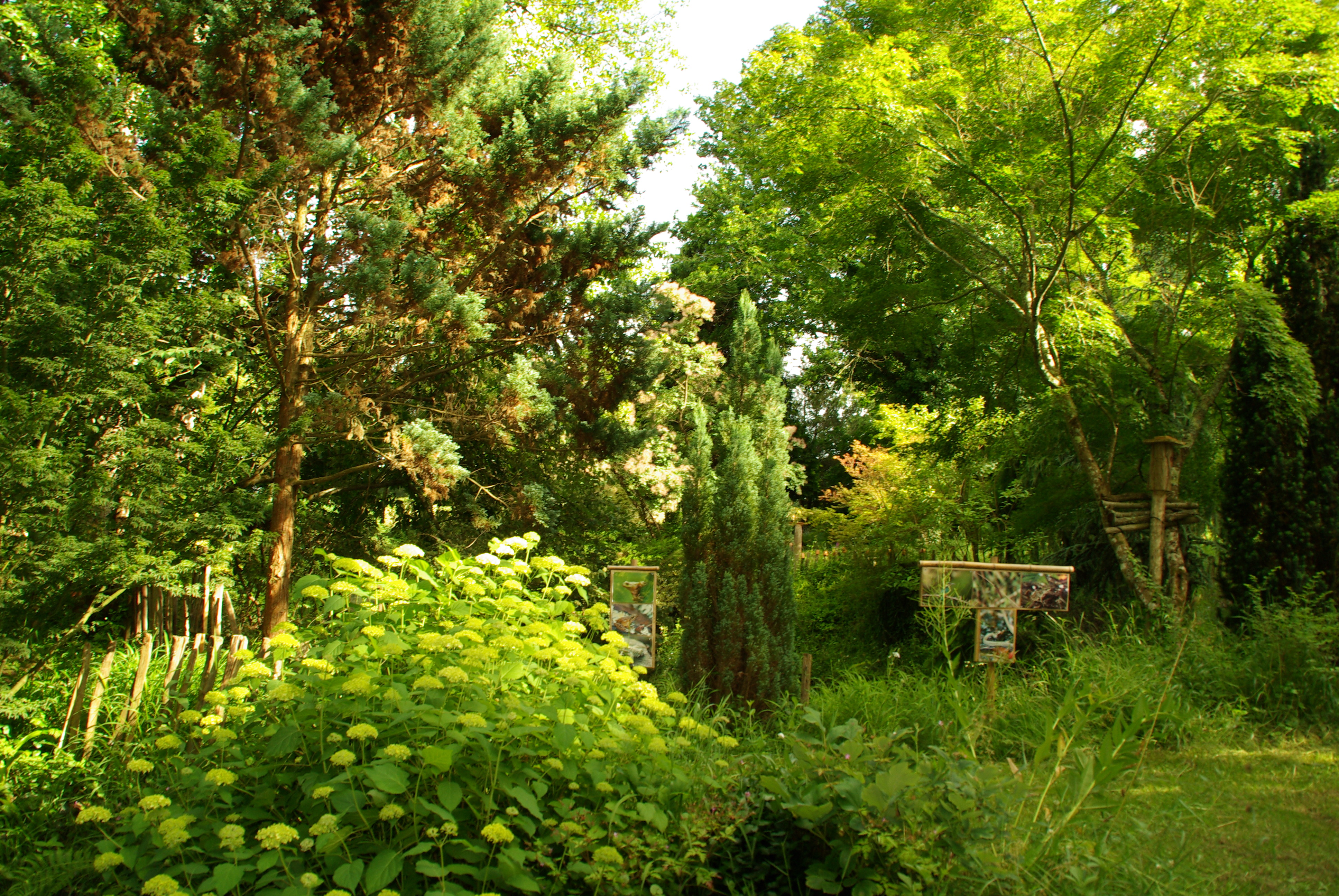 photo saint denis de pile 33910 arboretum de picampeau saint denis de pile 165442. Black Bedroom Furniture Sets. Home Design Ideas