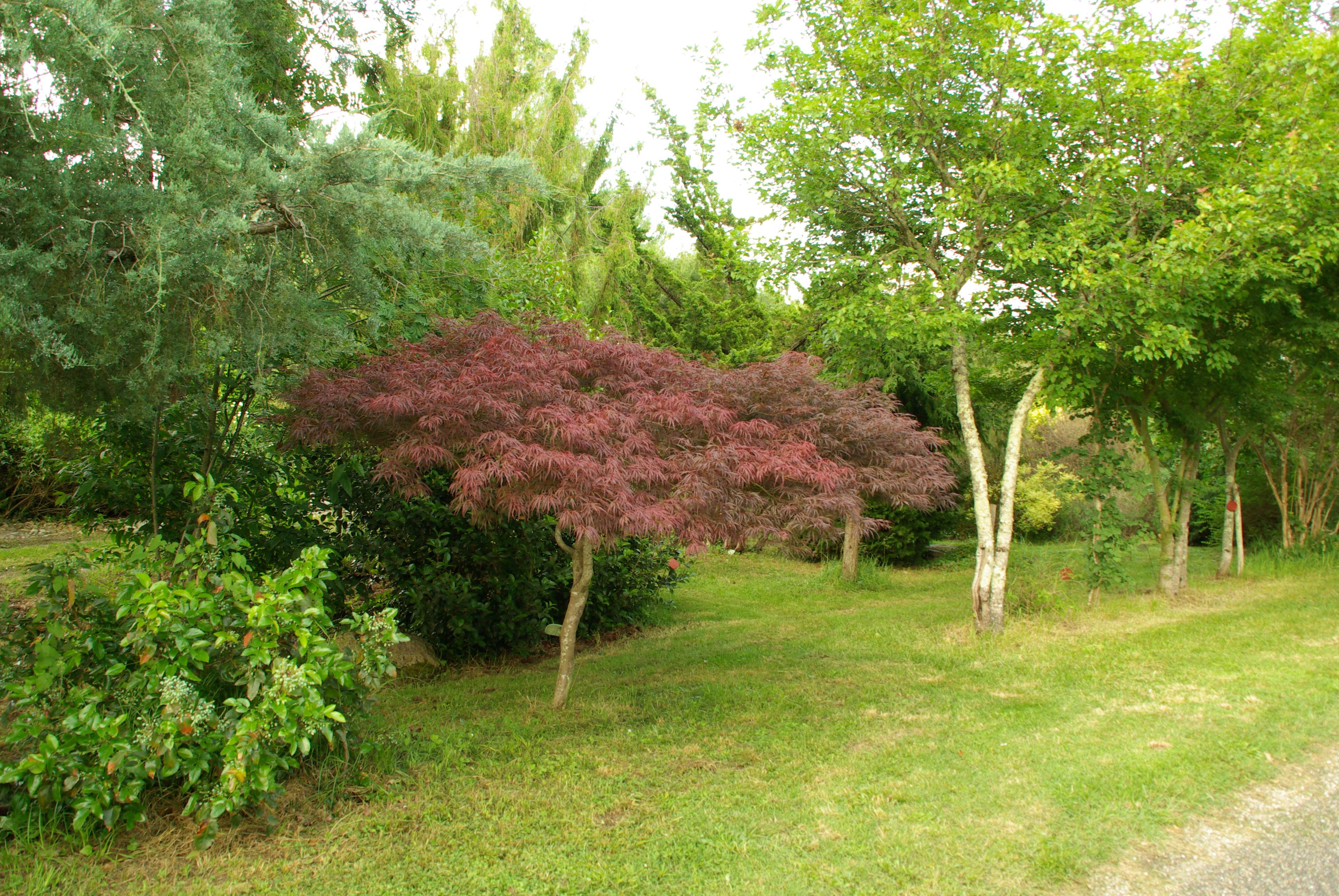 photo saint denis de pile 33910 arboretum de picampeau saint denis de pile 165443. Black Bedroom Furniture Sets. Home Design Ideas