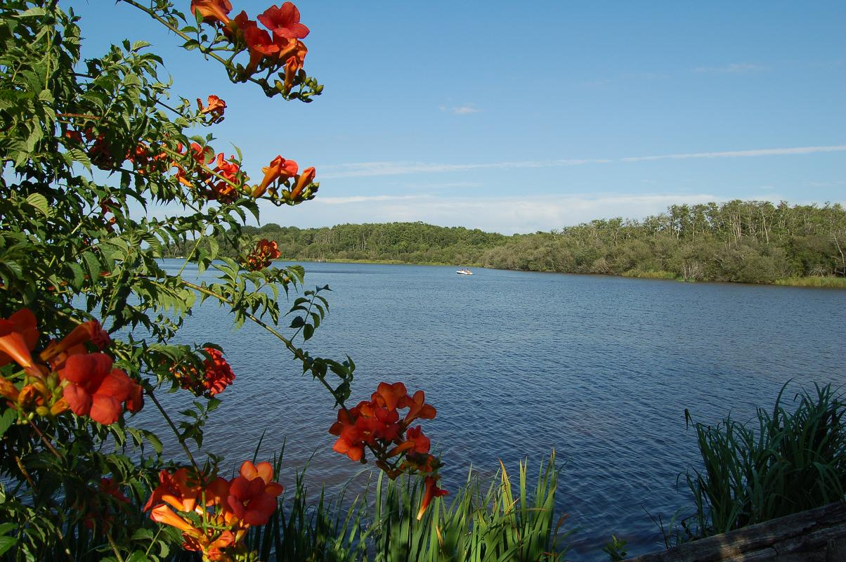 photo à mimizan (40200) : la promenade fleurie - mimizan, 138702