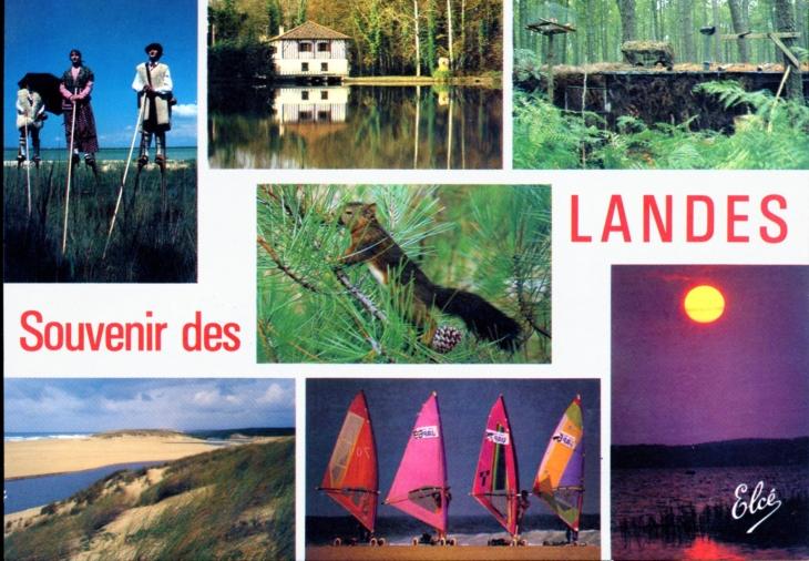 photo mont de marsan 40000 souvenir des landes carte postale de 1990 mont de marsan. Black Bedroom Furniture Sets. Home Design Ideas