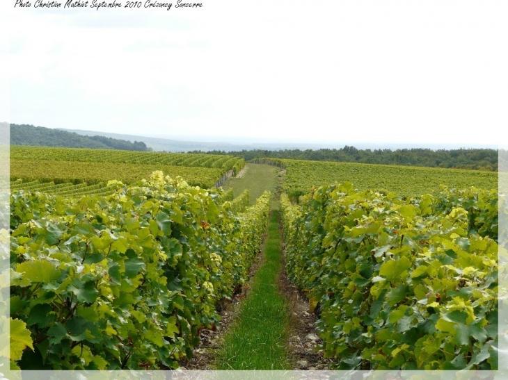 Photo cr zancy en sancerre 18300 les vignes - Camping les vignes lit et mixe site officiel ...