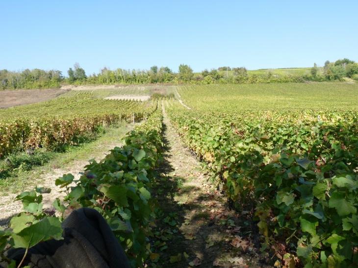 Photo montigny 18250 les vignes montigny 41233 - Camping les vignes lit et mixe site officiel ...
