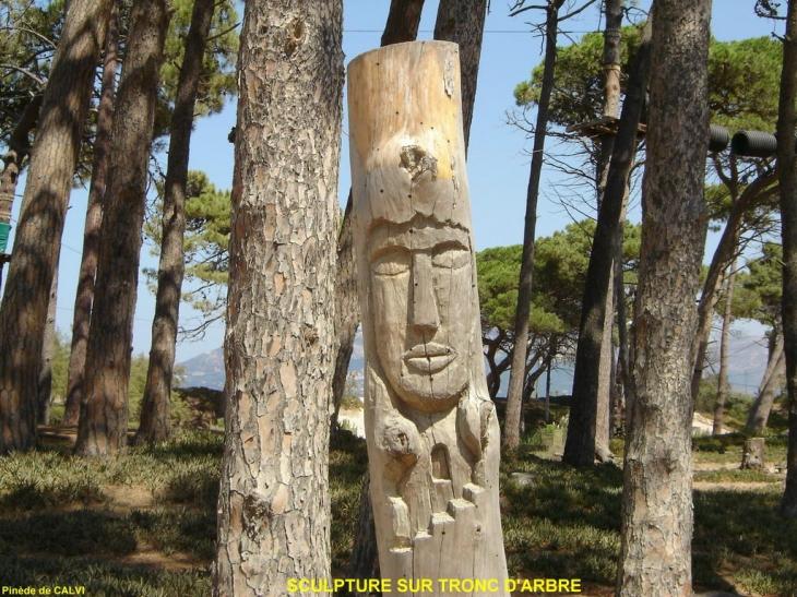 photo calvi 20260 sculpture sur tronc d 39 arbre dans la pin de longeant la plage n 39 est plus. Black Bedroom Furniture Sets. Home Design Ideas