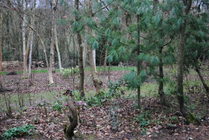 Photo beaumont le hareng 76850 le jardin de bellevue for Beaumont le hareng jardin de bellevue