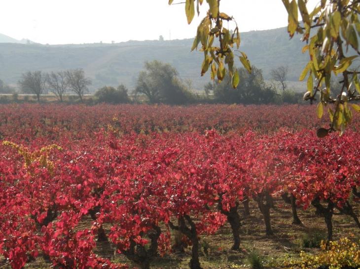 Photo montredon des corbi res 11100 les vignes en - Camping les vignes lit et mixe site officiel ...